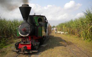 Alte Dampflokauf im Einsatz auf indonesischer Zuckerrohrplantage. Die Herde eines Ziegenhirten mit Sonnenschirm grast auf dem Nachbargleis.